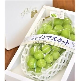 ぶどう(シャインマスカット)1房 化粧箱入り 0010-205