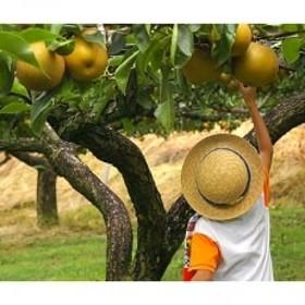 満喫!佐々木農園で梨狩り体験!(4名様まで)