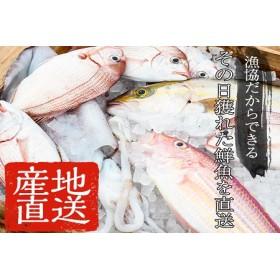 産地直送!新鮮!海の幸 朝獲れ鮮魚の詰合せ