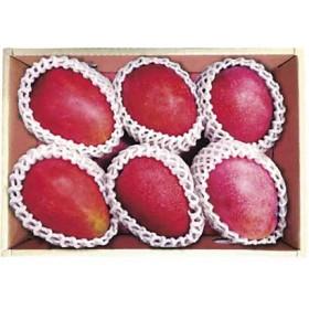 台湾産アップルマンゴー IK-002 フルーツ