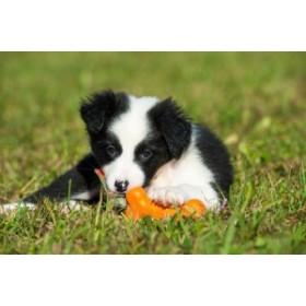 メジャードッグ (MAJOR DOG) MAJOR DOGメジャードッグ ペット用おもちゃ Bone Dummy