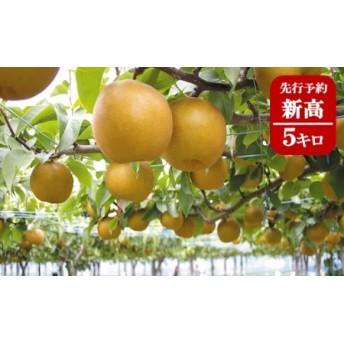 果樹園から直送!境町産新高5キロ【数量限定】