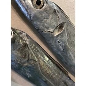 竹中水産の「釣の太刀魚」 約2キロ!