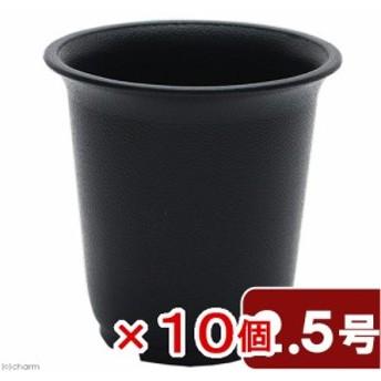 プラ鉢 2.5号 黒 多肉植物 植え替え 10個入り