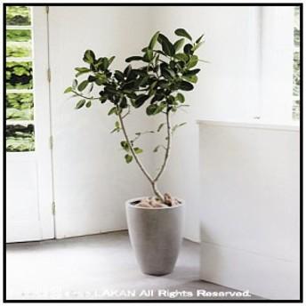 スタウトアッシュミドルφ36cm 円状型コンクリート樹脂製植木鉢 / ANPorcelain社 ANSA3645