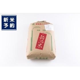 【新米早期予約】D112 岩船米コシヒカリ(玄米)