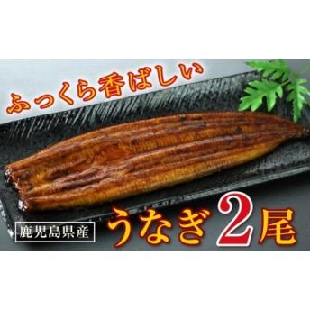 鹿児島産 特上うなぎ140g×2尾!