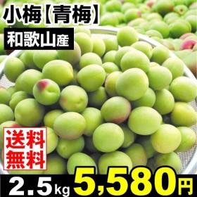 青梅 生梅 和歌山産 小梅青梅 2.5kg 梅 ウメ 梅 食品