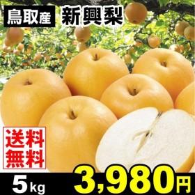 梨 鳥取産 新興梨 5kg なし 食品 国華園