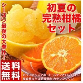 送料無料 初夏の柑橘セット(ゴールデンオロブロンコ約2kg+訳ありカラマンダリン約3kg) 合計約5kg