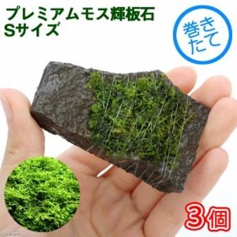 (水草)巻きたて プレミアムグリーンモス付 輝板石 Sサイズ(無農薬)(3個)