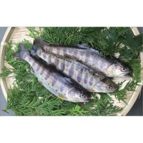 ユズアマゴ (成魚 1㎏・10~12尾入) 【B110】
