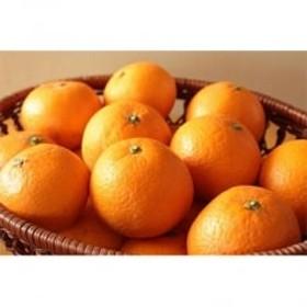 高級清見オレンジ5kg(サイズおまかせ)