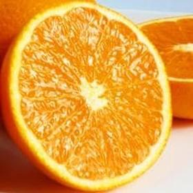 とにかくジューシー 清見オレンジ 5kg