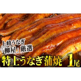 上峰鰻 鰻蒲焼 1尾
