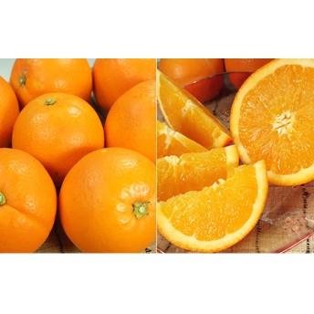 ネーブルオレンジ[約4.5kg]和歌山県産 春みかん(ネーブルオレンジ 和歌山県産 春みかん春柑橘 (果実サイズおまかせ))
