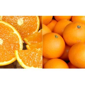 清見オレンジ[約5kg]和歌山県産 春みかん(清見オレンジ 和歌山県産 春みかん春柑橘 (果実サイズおまかせ))
