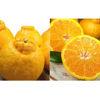 デコポン[約2.8kg]和歌山県産春みかん(デコポン 和歌山県産春みかん春柑橘 (果実サイズおまかせ))