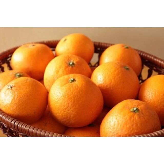 清見オレンジ10kg(M~LLサイズ混合)【里美農園】◆◆