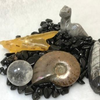 化石セット (2)