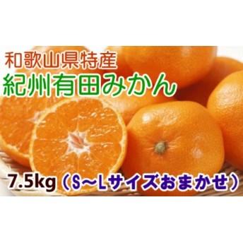 紀州有田みかん7.5kg(S~L)サイズおまかせ・赤秀品【和歌山厳選館】◆◆