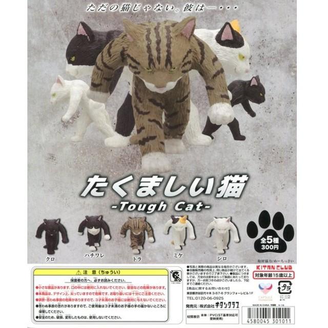 たくましい猫 Tough Cat 全5種セット