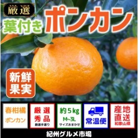 葉付きポンカン 約5kg(M~3L)【紀州グルメ市場】◆◆