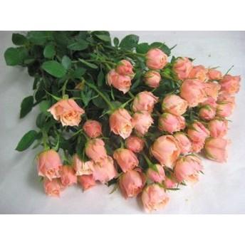 SPミニバラオレンジ(S/Oドット(Oなど5本 切花 生け花 ハーバリウム花材 ドライフラワーに最適