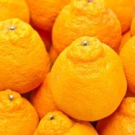 【春柑橘の代表格】有田産不知火約5kg(M~2Lサイズおまかせ)