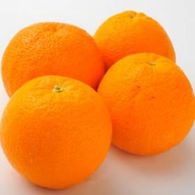 南国フルーツ・オーストラリア産オレンジ小10玉 送料無料¥2,500