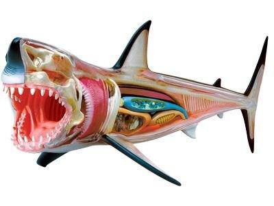 【4D MASTER】26111 立體拼組模型-半透視大白鯊