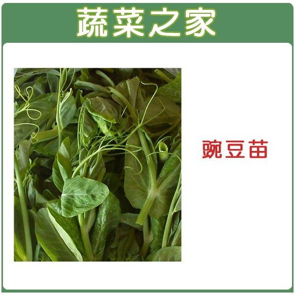 【蔬菜之家】大包裝E07.豌豆苗(快炒店的豆苗菜)種子600克
