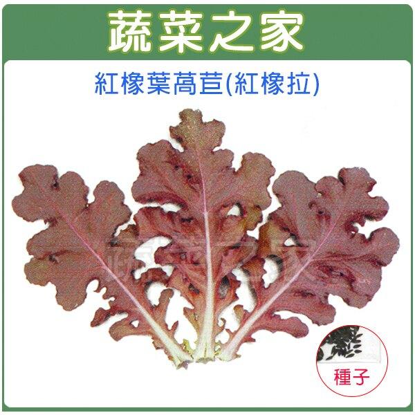 【蔬菜之家】A79.紅橡葉萵苣種子(紅橡拉)(共有2種包裝可選)