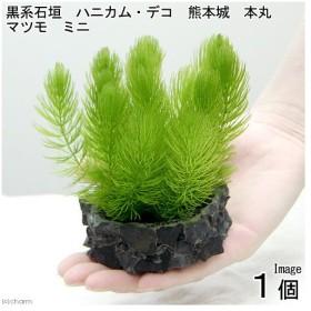 (水草)黒系石垣 ハニカム・デコ 熊本城 本丸 マツモ ミニ(1個)