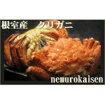 北海道根室産 クリガニ9~14尾(計1.9kg)