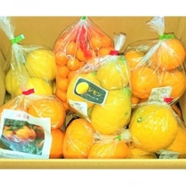 道の駅なんごう おまかせ旬の柑橘詰め合わせ(約5kg~6kg)