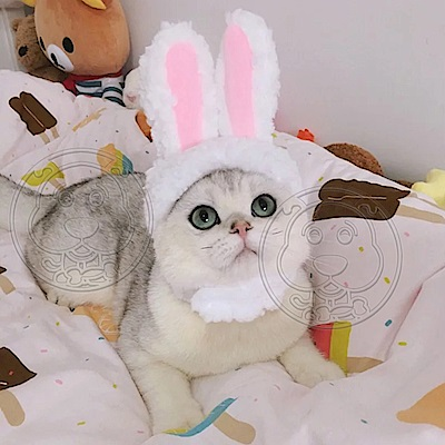 dyy》寵物專屬兔耳帽子貓用頭套-S/M號