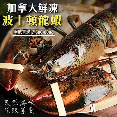 (滿699免運)【海陸管家】加拿大波士頓螯龍蝦(每隻500g-600g) x1隻