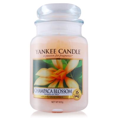 YANKEE CANDLE香氛蠟燭-金色玉蘭623g
