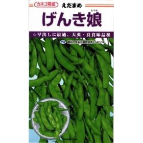 カネコ種苗 エダマメ 枝豆 げんき娘 100粒
