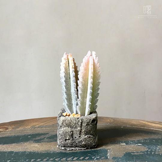【曙】仿真仙人掌盆栽 多肉植物 玻璃盆栽 創意擺飾 Loft 工業風 咖啡廳 民宿