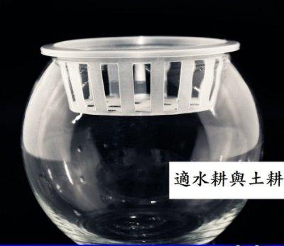 坡璃花瓶 圓球 水耕 植物栽培皿 大號