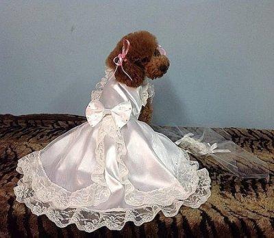 敗犬女王寵物手工衣精品館 ~狗狗衣服量身訂作~韓式漸層施華洛世奇白色婚紗禮服--中型犬--