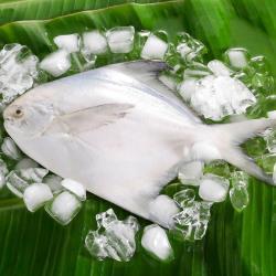 華得水產 鮮嫩野生白鯧魚2件(300-400g/尾)