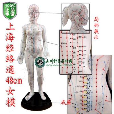 正品 經絡通女模現貨在台 人體針穴位模型/人體穴位模型/人體針灸模型 女48cm