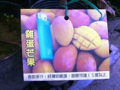 水果苗 ** 雞蛋芒果 ** 4吋盆/高40cm 香甜多汁【花花世界玫瑰園】OvO