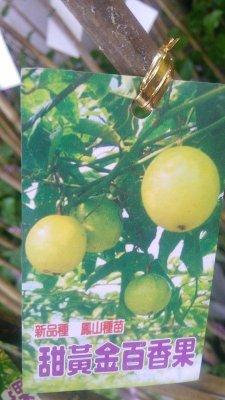 水果苗 ** 甜黃金百香果 ** 4吋盆/高20-60cm/香甜多汁【花花世界玫瑰園】OvO