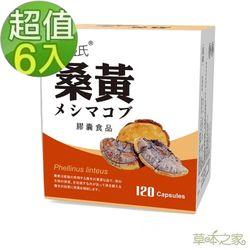 草本之家-桑黃子實體120粒X6盒