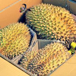 【鮮果日誌】★ 泰國產 ★ 水果之王金枕頭榴槤 20斤重 (約3~4顆)