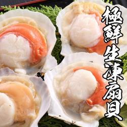 海鮮王 極鮮生凍半扇貝 *2包組(7-10顆/500g±10%/包)